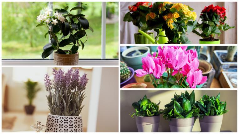 Какви растения да поставите във всяка стая според Фън Шуй