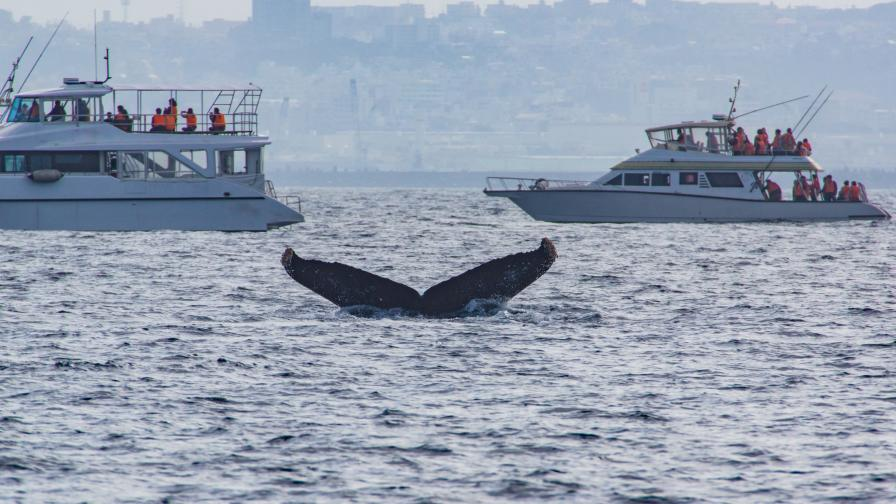 <p>Учени: Един от гигантите на океана се смалява&nbsp;</p>
