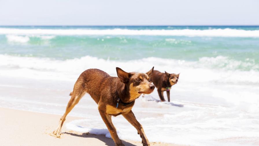 Вижте кучето, което беше продадено за 27 068 долара