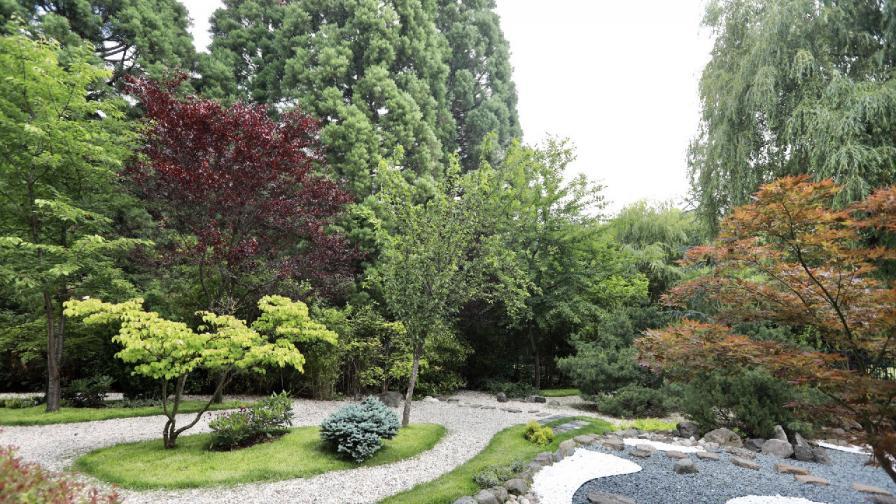 Райско кътче: Възстановената японска градина...