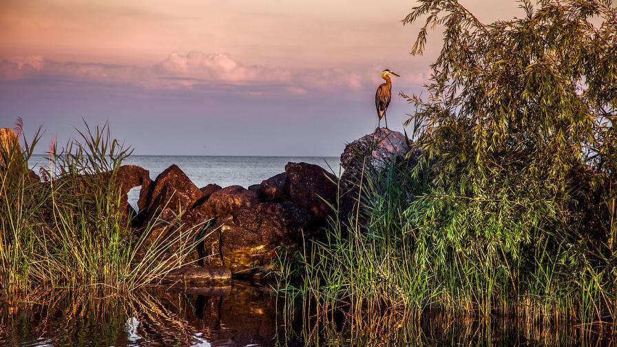 Езерото Ери в Канада
