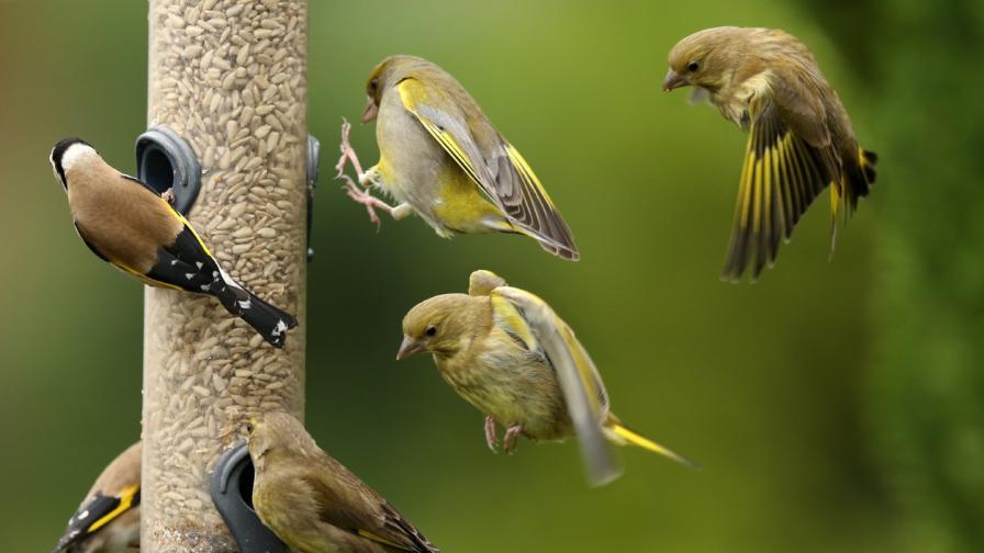 Непозната болест унищожава птици в САЩ