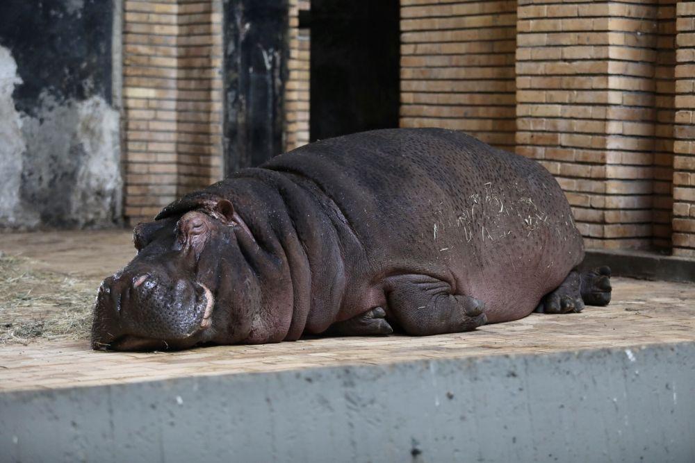 Как охлаждат животните в столичния зоопарк