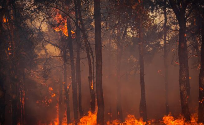 Четири деца са причинили пожара край Велинград