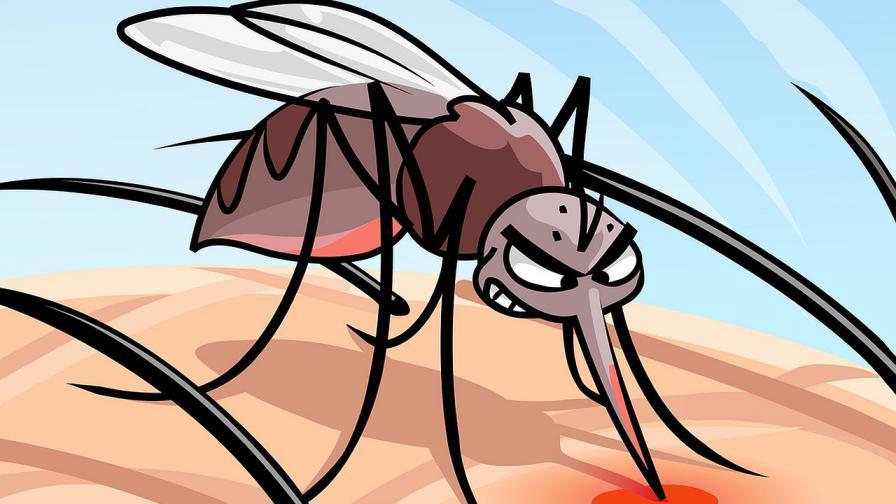 """Кафе, ракия и """"сладка кръв"""" и още митове за комарите"""