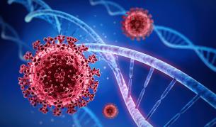 <p>Как тежкият COVID-19 подмамва&quot; имунната система</p>