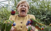 Папагал ухапа Ангела Меркел