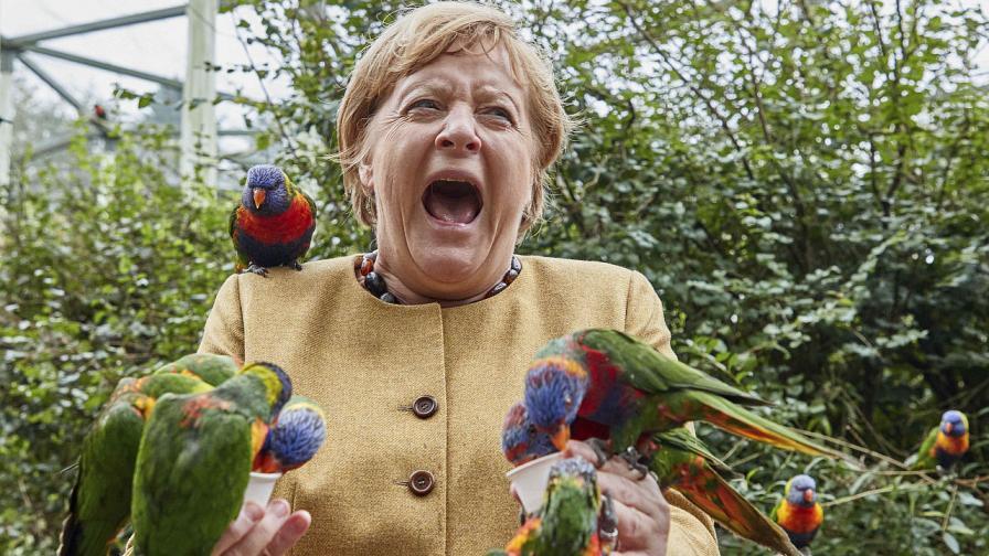 <p>Папагал ухапа Ангела Меркел (СНИМКИ)</p>