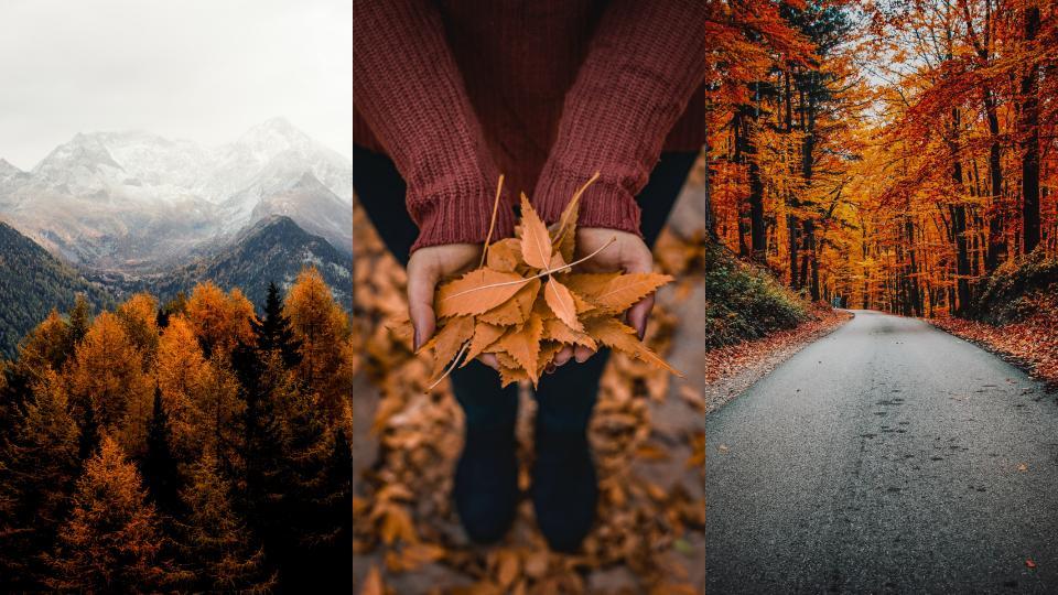 есен уют кафе листа природа