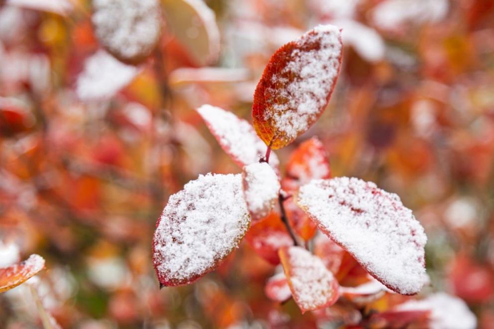 сняг есен зима
