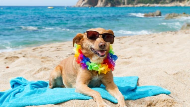 куче домашен любимец ваканция море плаж водорасли токсини топлинен удар