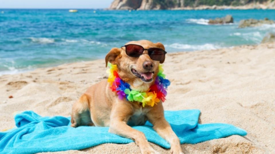 С куче на море - какво трябва да знаем, за да го предпазим