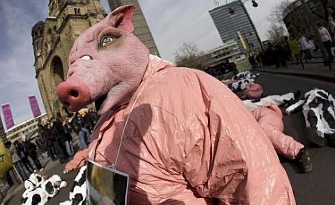 За свинския грип без паника