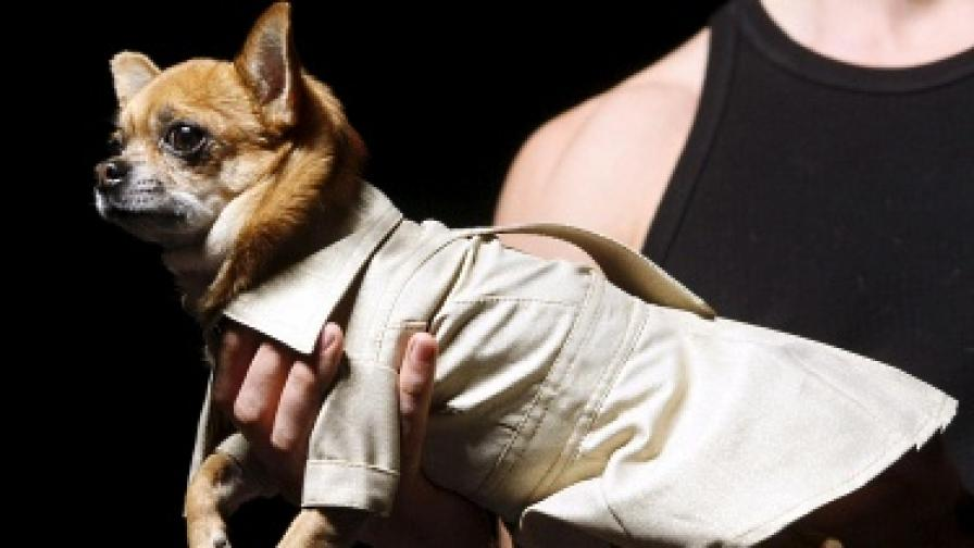 Куче с шлифер