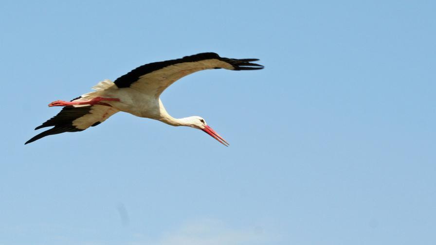 Една от прелитащите всяка година над езерото миграционни птици.