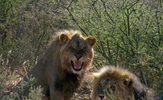 Как се снимат триизмерно диви зверове