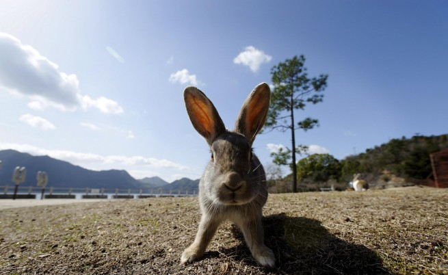 Стокхолм се отоплявал със... зайци