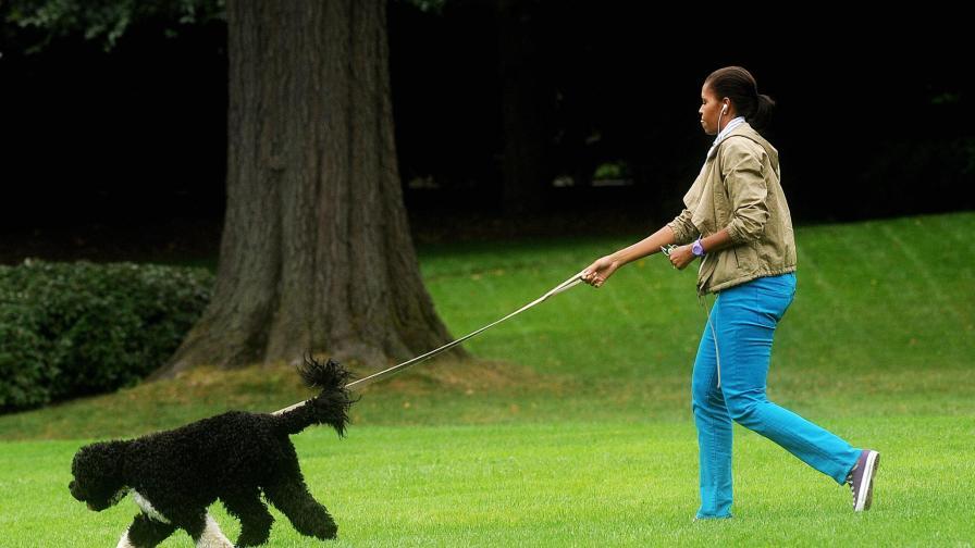 Мишел Обама по зелената поляна с първи домашен любимец Бо.
