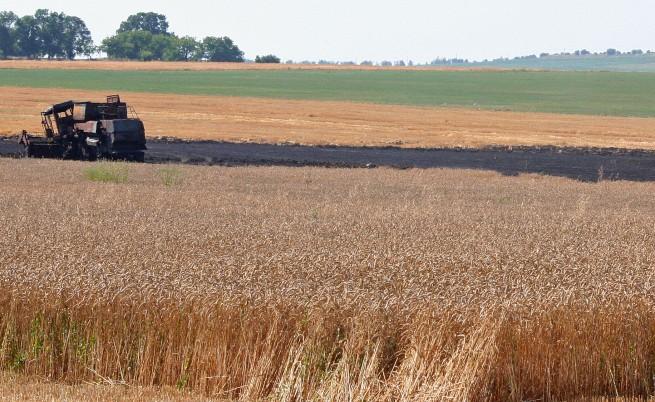 Наша пшеница издържа на студ, суша и болести