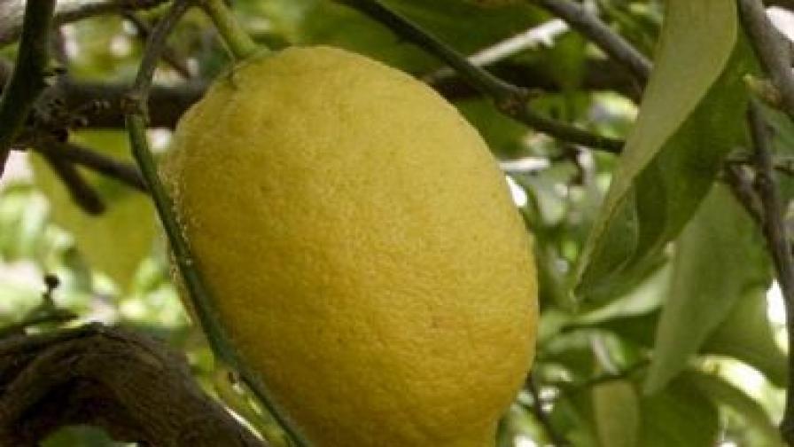 Опасни ли са турските плодове