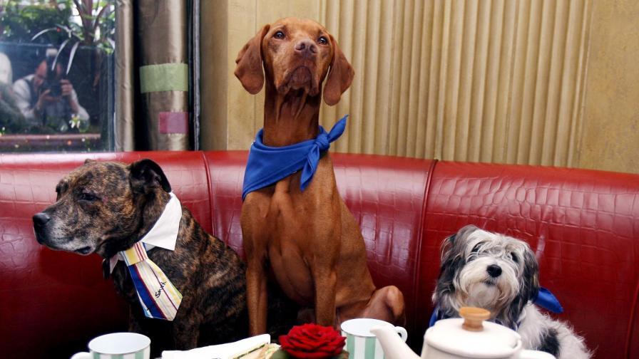 Инжектират чипове на всички британски кучета