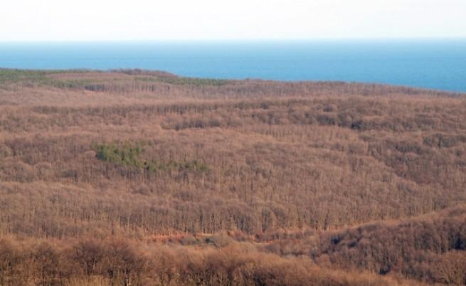 Големите заменки на гори са ставали с колективни решения на правителството