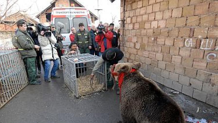 Сръбската мечка Милена е починала в съня си