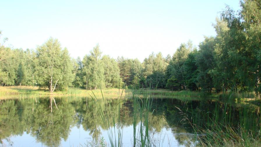 Новият проектозакон за горите вече онлайн