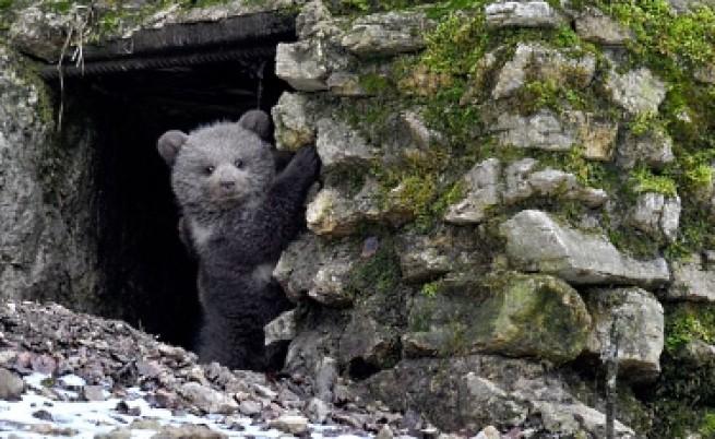 Убиха мечка край Кутела, но дали е правилната?