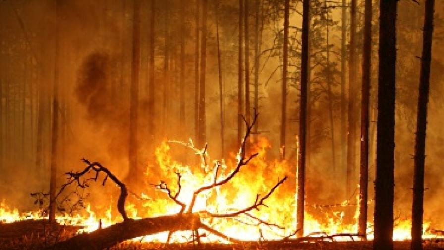 Горските пожари в Русия вече взеха 52 жертви
