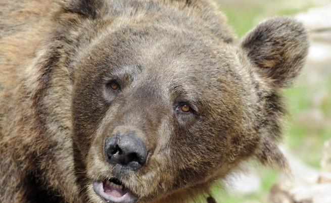 И за хората е важно ще заспят ли мечките