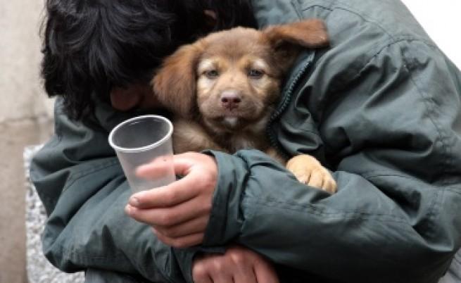 Ще броят кучетата в София