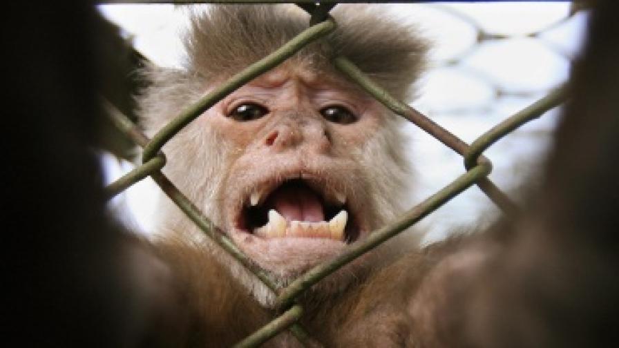 Без експерименти с големи маймуни в ЕС