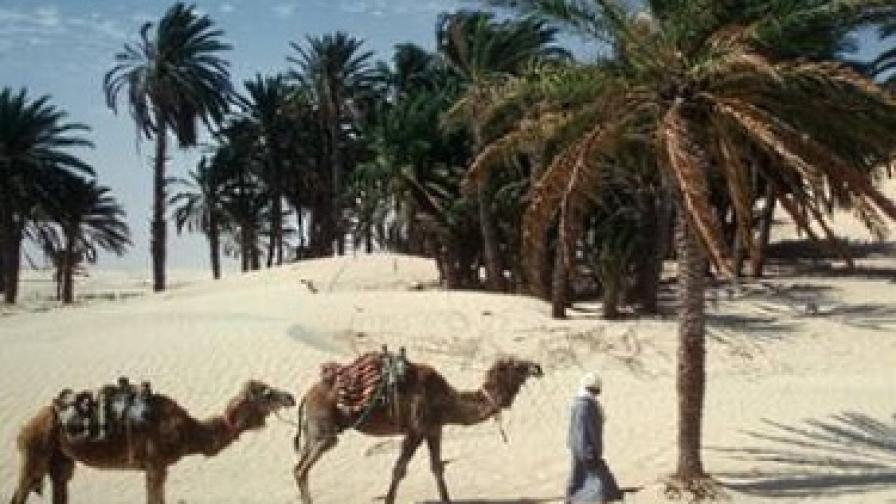 Нова година в Тунис