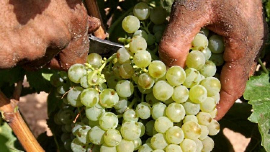 ЕС вече ще пие македонско вино само от Гърция