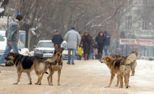 Държавата е длъжна да ни пази от бездомни кучета