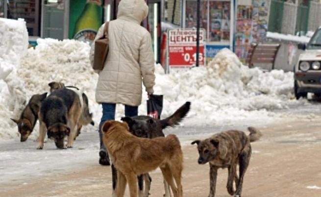 9000 са бездомните кучета в София