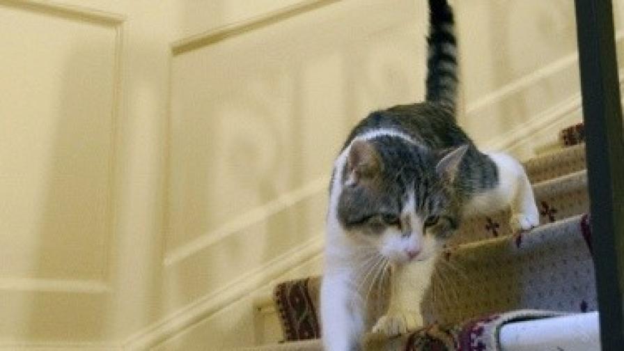 Мъж отърва затвор заради котката си