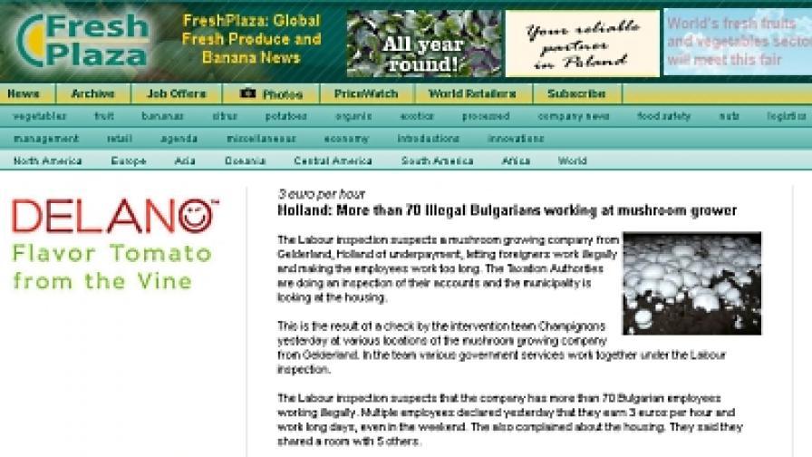 Холандия: Властите хванаха нелегално работещи българи