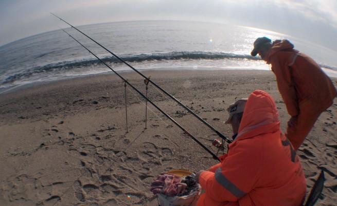Хищната ктенофора изяждала рибата в Черно море