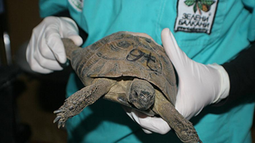 Рашков може да влезе в затвора заради костенурките си
