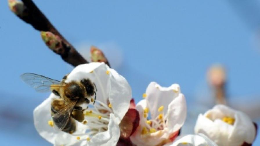 България сред най-големите производители на мед в ЕС