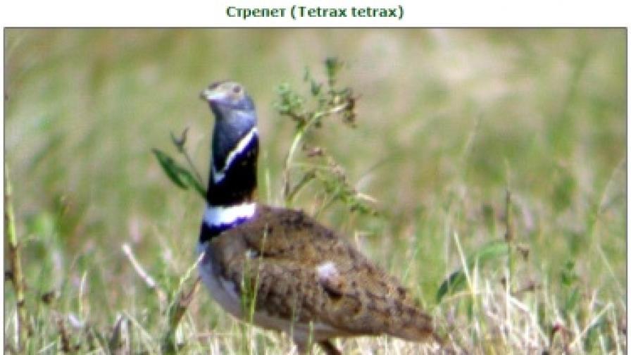 Изчезнала преди 10 г. птица се появи в България