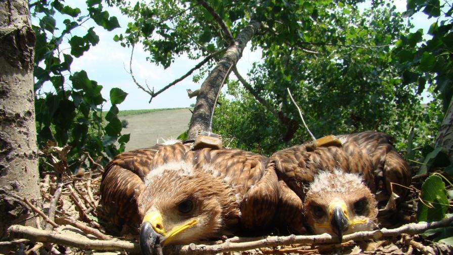 Британец от Бургас крадял яйца на редки птици