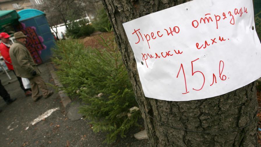 """Елхички от гора до тази на Сакскобурготски на пазара """"Ситняково"""""""