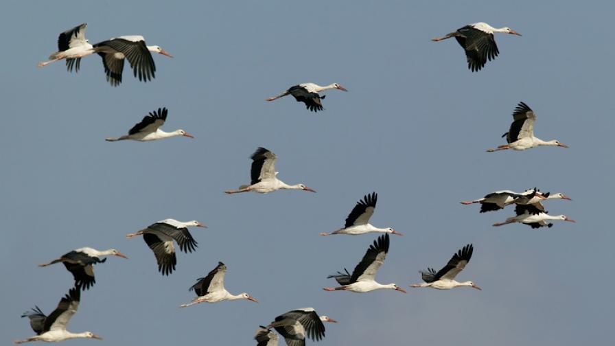 Екоминистерството отмени проект в името на птиците
