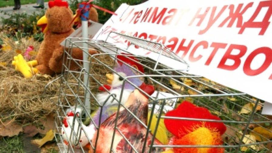 "ЕС разследва ""нелегалните кокошки"""