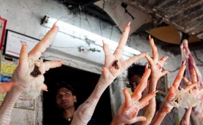 Архитект предлага система за производство на пилешко месо в стил
