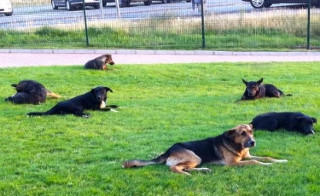 Увеличават ловците на кучета в София до осем