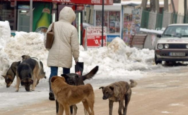Фандъкова: Няма да отстъпя за агресивните кучета